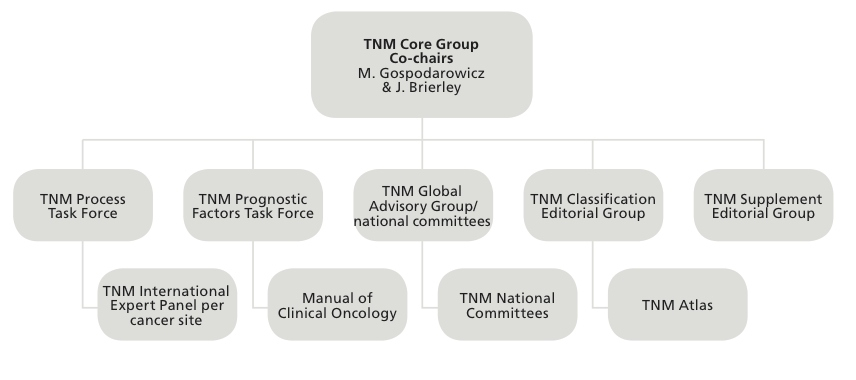TNM Global Advisory Group diagram.jpg